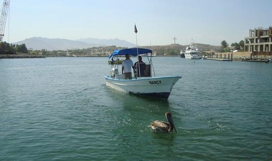 Sportfishing la playa san jose del cabo for San jose del cabo fishing charters